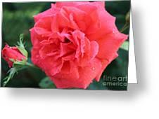 Rose And Rose Bud Greeting Card by Judy Palkimas