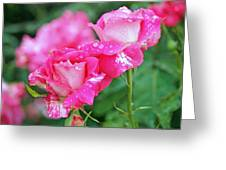 Rose Bonbons Greeting Card by Rona Black