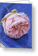 Rose Flower Greeting Card by Frank Tschakert