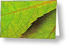 Rose Foliage Number Two Greeting Card by Chris Berry