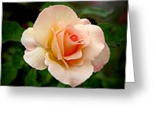 Rose Is A Rose Is A Rose Greeting Card by Christine Till