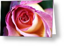 Rose Greeting Card by John Rizzuto
