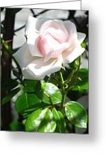 Rose Named Pearl Greeting Card by Sonali Gangane