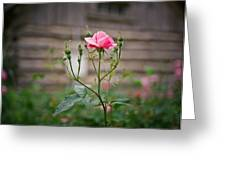 Rose Of Independence Greeting Card by Linda Unger