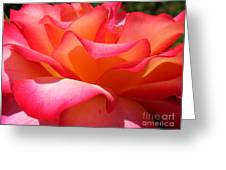 Rose Petals Greeting Card by Patti Whitten