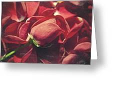 Rose Greeting Card by Taylan Soyturk
