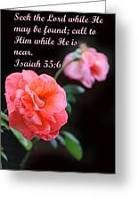 Rose With Echo Is. 55v6 Greeting Card by Linda Phelps