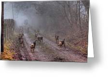 Ross Harriers Hunt Greeting Card by Steve Lindon