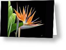 Royal Beauty I - Bird Of Paradise Greeting Card by Ben and Raisa Gertsberg