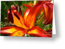 Royal Sunset Lily Greeting Card by Jacqueline Athmann