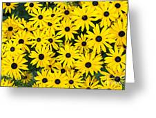 Rudbeckia Fulgida 'pot Of Gold' Greeting Card by Tim Gainey