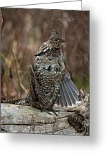 Ruffled Grouse Drumming Greeting Card by Gary Langley