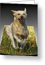 Run Puppy Run Greeting Card by B Wayne Mullins