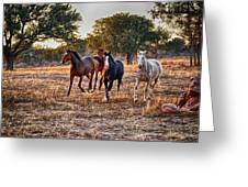 Running Horses Greeting Card by Kristina Deane