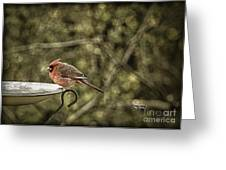 Rustic Cardinal Greeting Card by Cris Hayes