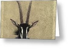 Sable Greeting Card by James W Johnson
