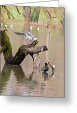 Safe Landing Greeting Card by Theresa Selley