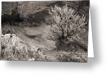 Sagebrush On Polecat Bench Greeting Card by Janeen Wassink Searles