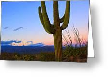 Saguaro Dusk Greeting Card by Mike  Dawson
