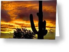 Saguaro Silhouette  Greeting Card by Robert Bales