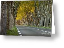 Saint Remy Trees Greeting Card by Brian Jannsen