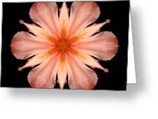 Salmon Daylily I Flower Mandala Greeting Card by David J Bookbinder
