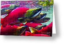 Salmon Run Greeting Card by Wingsdomain Art and Photography