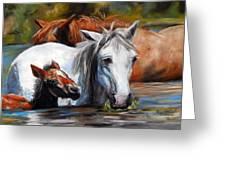 Salt River Foal Greeting Card by Karen Kennedy Chatham