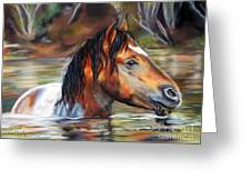 Salt River Tango Greeting Card by Karen Kennedy Chatham
