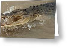 Saltwater Crocodile Greeting Card by Bob Christopher