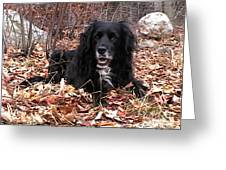 sammi smiling in leaves Greeting Card by Randi Shenkman