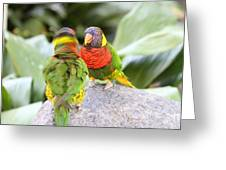 San Diego Zoo - 1212341 Greeting Card by DC Photographer