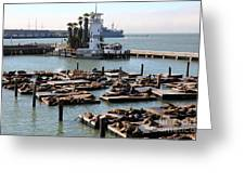 San Francisco Pier 39 Sea Lions 5d26102 Greeting Card by Wingsdomain Art and Photography