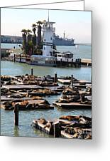 San Francisco Pier 39 Sea Lions 5d26103 Greeting Card by Wingsdomain Art and Photography