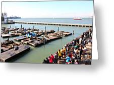 San Francisco Pier 39 Sea Lions 5d26109 Greeting Card by Wingsdomain Art and Photography