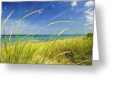 Sand Dunes At Beach Greeting Card by Elena Elisseeva
