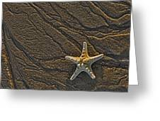 Sand Prints And Starfish Greeting Card by Susan Candelario