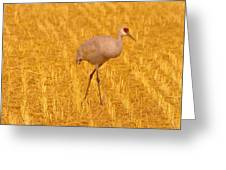 Sandhill Crane  Greeting Card by Jeff  Swan