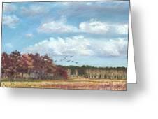 Sandhill Cranes At Crex With Birch  Greeting Card by Jymme Golden