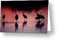Sandhill Cranes Greeting Card by Steven Ralser