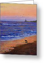 Sandpiper At Sunset Greeting Card by C Steele