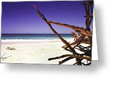 Sands Of Barbados Greeting Card by Max CALLENDER