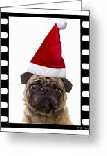 Santa Pug - Canine Christmas Greeting Card by Edward Fielding