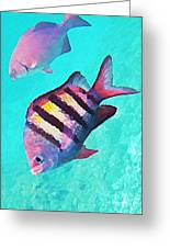Sargeant Fish Greeting Card by John Malone