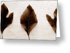 Sassafras Leaves In Sepia Greeting Card by Michelle Calkins