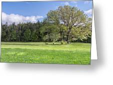 Save My Tree Greeting Card by Jon Glaser