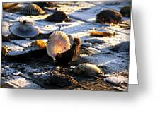 Half Shell On Ice Greeting Card by Karen Wiles