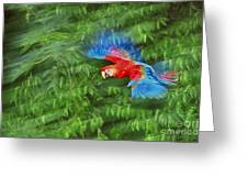 Scarlet Macaw Juvenile In Flight Greeting Card by Frans Lanting MINT Images