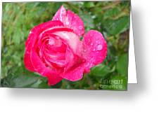 Scented Rose Greeting Card by Ramona Matei