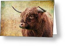 Scottish Highland Steer Greeting Card by Steve McKinzie